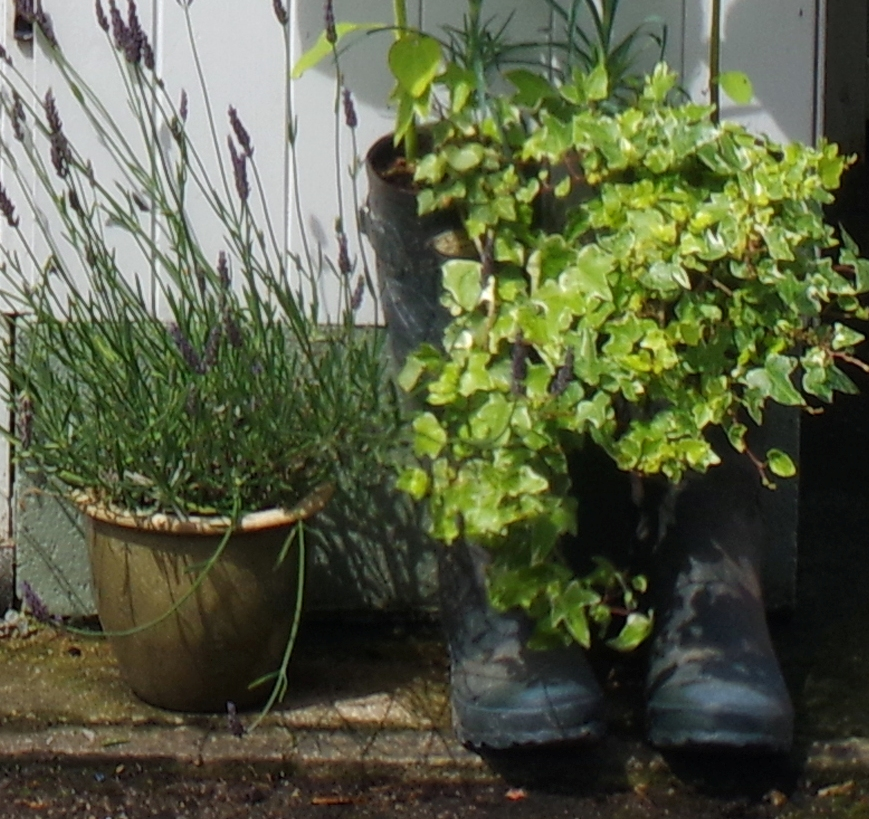 Sue's old wellies repurposed as plant pots