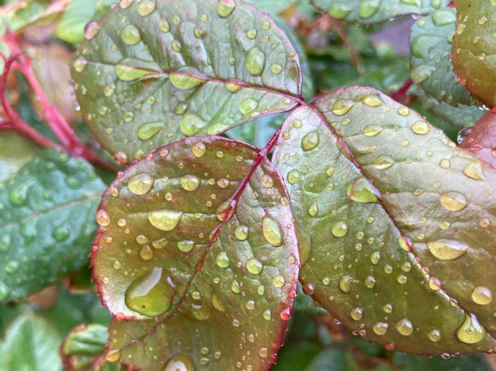 Raindrops on multi-coloured leaves.